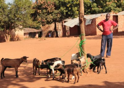 Distribution of goats for income generation