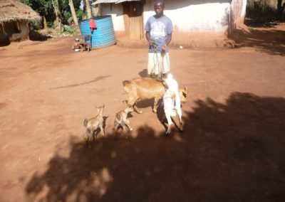 Income from goats for orphans
